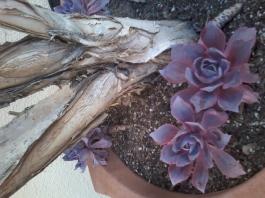 CactusStillLife